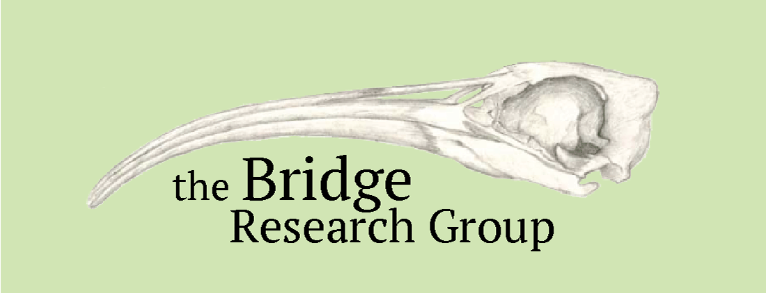 Bridge Lab Webpage