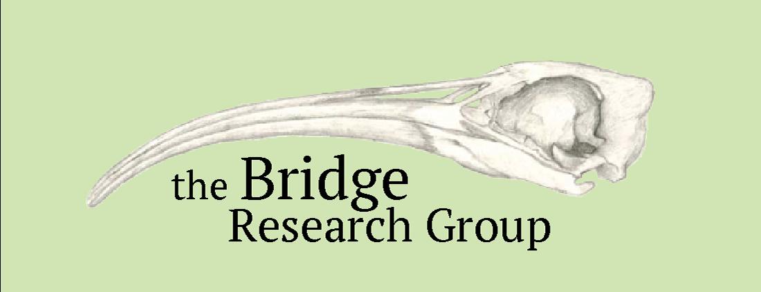 Bridge Lab Webpage